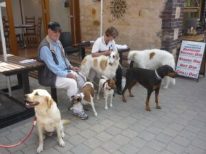 Dogs in Hahndorf